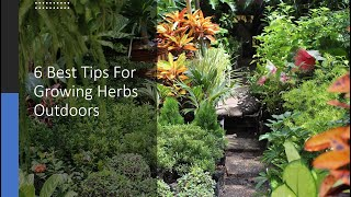 6 Best Tips For Growing Herbs Outdoors
