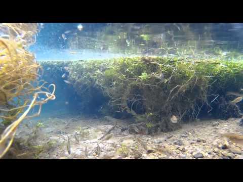 Paraziták a víztartályokban