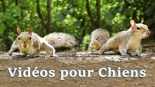 Vidéos pour Chiens : Videos for Dogs to Watch Squirrels ✅