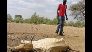 Deaths reported as drought worsens - VIDEO