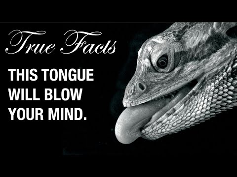 Hadí jazyky - Pravdivá fakta