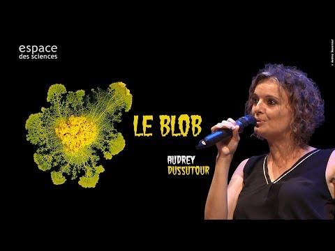 Vidéo de Audrey Dussutour