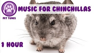 1 Hour of Relaxing Music for Cheeky Chinchillas! Chinchilla Music. Pet Music.