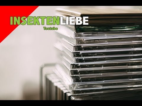 ❌Terrarium aus CD-Hüllen basteln!   UPCYCLING LIFEHACK