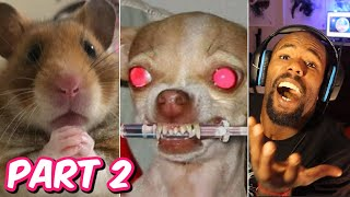 Best Of 2020 - Top Funny Pet Videos - TRY NOT TO LAUGH | Part 2 (Reaction)