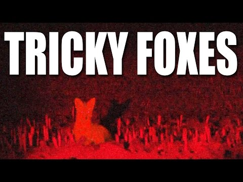 Tricky Foxes
