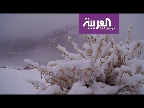 العرب اليوم - شاهد: تعرف على الموجة القطبية التي ستؤثر على أجواء السعودية خلال أيام