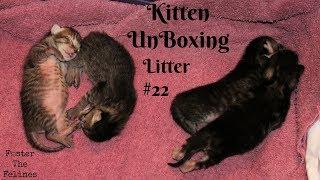 Kitten UnBoxing #22 Calming A Nervous New Mama Cat 😺 New Foster Kittens