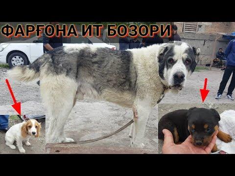 ФАРҒОНА ИТ БОЗОРИ    Ферганский собачий рынок 2019