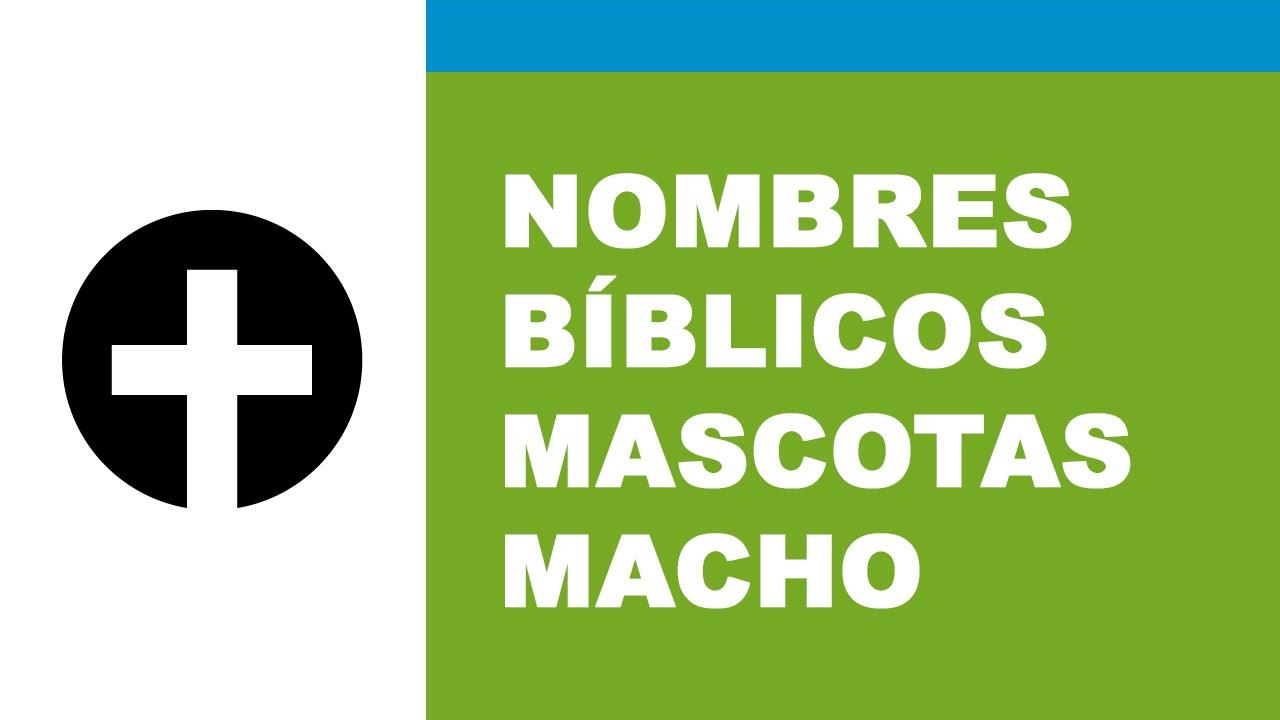 Nombres bíblicos para mascotas macho - www.nombresparamimascota.com
