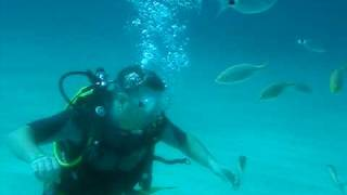 preview picture of video 'TopDive Mallorca - Atrayendo a los peces'