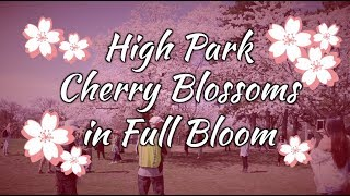 Sakura Watch May 9, 2018 - Full Bloom In High Park - Episode 14