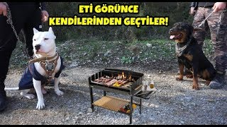 Tyson Ve Marla İle Orman'da Mangal Keyfi Yaptık 😄 ( Rottweiler ve Amstaff)