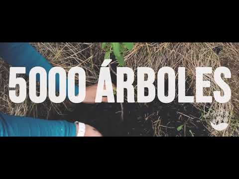 Plantemos 5.000 árboles con Porvenir