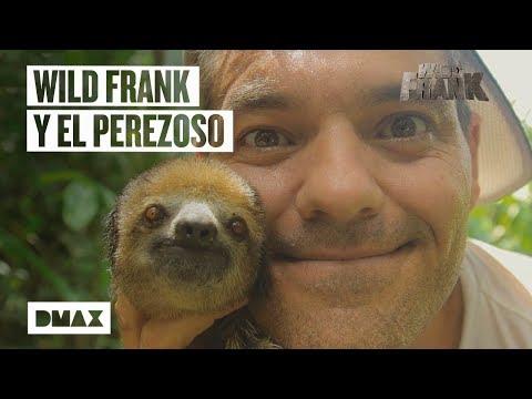Seznámení s Vasilem, brazilským lenochodem