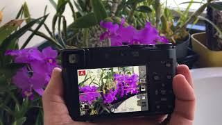 Lumix ZS200 vs LX100 vs FZ1000 Best Travel Camera! | Kholo.pk