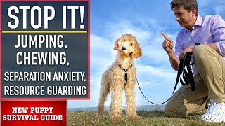 NEW PUPPY SURVIVAL GUIDE: The right way to EASILY STOP These four Pet Issues NOW! (Ep 6)
