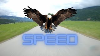 Need for speed???????? | - New Rates!???? | FPV Freestyle