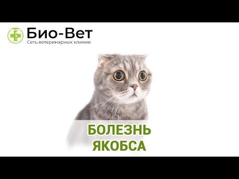 Болезнь Якобса. Ветеринарная клиника Био-Вет.