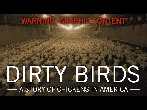 Original Fare – Dirty Birds: A Story of Chickens in America   Original Fare   PBS Food