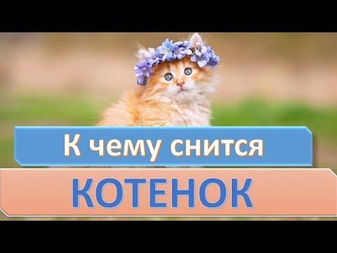 К чему снится котенок | СОННИК