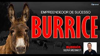Empreendedor de Sucesso: Burrice, será mesmo?
