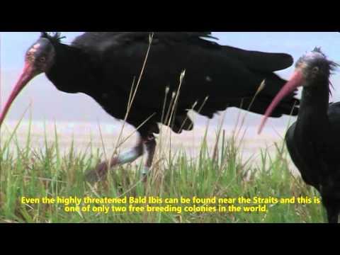 Ornitología en el Campo de Gibraltar