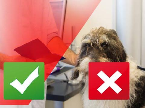 Video 5 Signs of Kidney Disease in Dogs