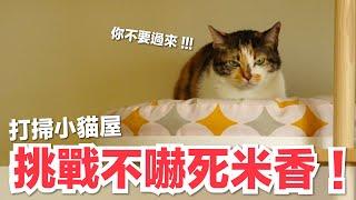 打掃小貓屋!不知道米香會不會嚇死...|好味貓日常EP72