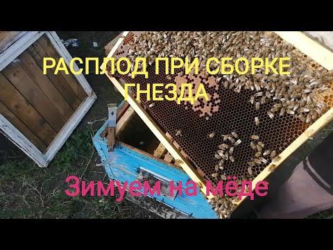 Сборка гнезда пчёл в зиму при наличии расплода.