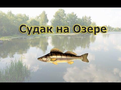 Русская Рыбалка 3.99 (Russian Fishing) Судак на Озере