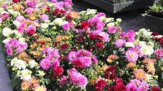 Gardening 101 Series | How To Use Annuals Vs. Perennials With Lynn Hillman