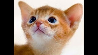 Рыжий кот - Самая лучшая запись песни!!!!