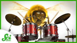 Why These Baby Bees Love Jam Sessions
