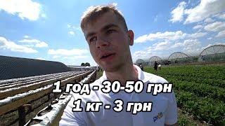 Скільки заробляють в Україні на клубніці. Поїздка в Дніпро