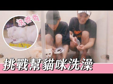 展榮展瑞兩兄弟挑戰幫貓咪洗澡有多辛苦