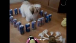 Hitler has been transformed into a dog
