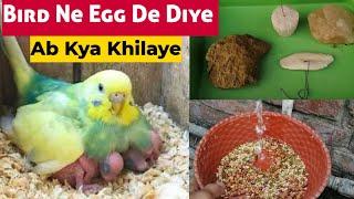 Bird Ne Egg De Diye Ab Kya Khilaye/Chicks Ki Achi Health Ke Liye/Perfect Diet for Breeding