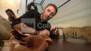 SUMATRA:ENDANGERED SUMATRA TIGERS (REPORT)
