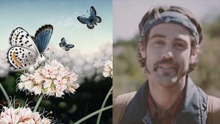 Protecting The El Segundo Blue Butterfly - Chevron Human Energy