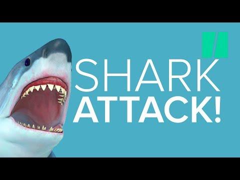 Jönnek a cápák, rettenetes sikolyt hallasz, a víz hirtelen vörös lesz