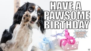 Funny Happy Birthday Memes Of Dogs