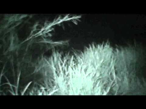 DONT WATCH THS ONE Real Alien Sighting 14 : Possible Two Aliens !! Spooky