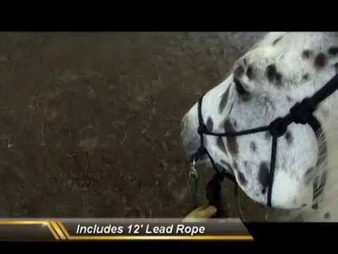 HOLISTIC Training Halter | Bridle with Holistic Horse Trainer Missy Wryn