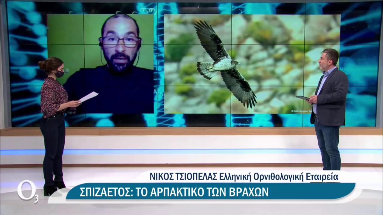 Τα σπάνια αρπακτικά στους ελληνικούς αιθέρες | 15/3/2021 | ΕΡΤ