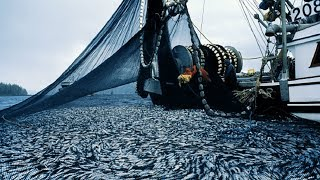 Big Catch Fishing in The Deep Sea With Boat Big Modern