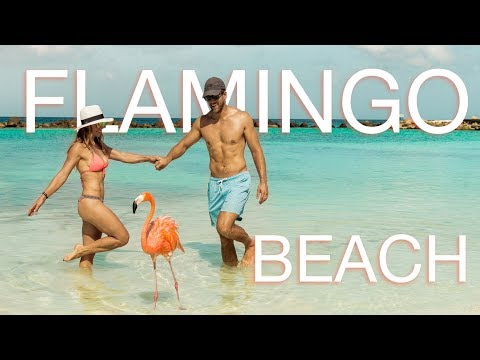 Download Swimming with Flamingos? - Flamingo beach in Aruba Mp4 HD Video and MP3