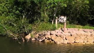 西表島マングローブ4