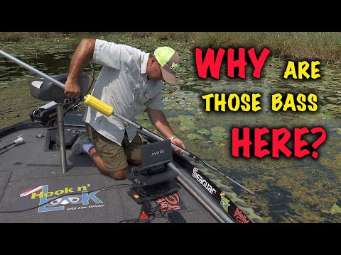 Why are those bass here?
