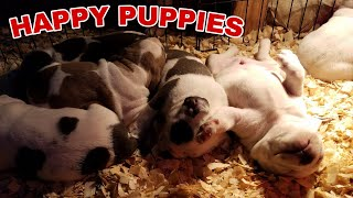 Signs of a Happy Puppy and Tips on weaning Puppies From Mommy